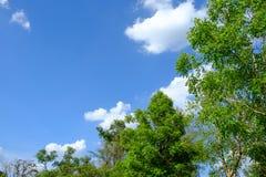 Witte wolk omringde bomen tegen een mooie duidelijke hemel Stock Afbeelding