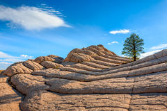 Witte Zak, Arizona, de V.S. Stock Afbeeldingen