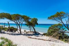 Witte zand en pijnboombomen in Alghero royalty-vrije stock fotografie