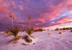 Witte Zandzonsopgang stock fotografie