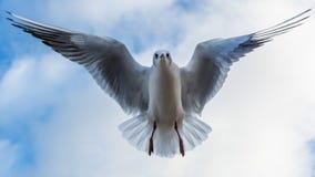 Witte zeemeeuw die het klappen de vleugels van ` s Royalty-vrije Stock Afbeeldingen