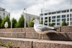 Witte zeemeeuw op de granietstappen Royalty-vrije Stock Foto