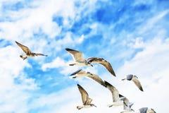 Witte zeemeeuwen die in de blauwe zonnige hemel vliegen Royalty-vrije Stock Fotografie
