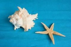 Witte zeeschelp en zeester Stock Afbeeldingen