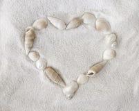 Witte zeeschelpen op wit zand stock afbeelding