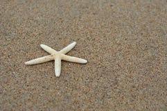 Witte zeester op het strand Stock Fotografie
