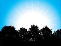 Witte zon. [Vector] Stock Foto's