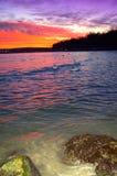 Witte zwanen bij evenigoverzees stock fotografie
