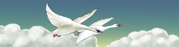 Witte zwanen in de hemel Stock Afbeeldingen