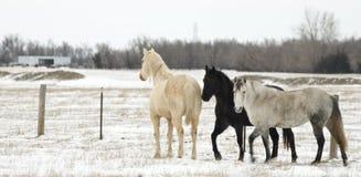 Witte zwart en grijs Royalty-vrije Stock Foto