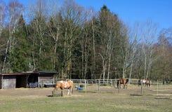 Wittmoor - padok przy lasową krawędzią - Ja - zdjęcie royalty free