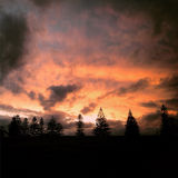 Wittrees di tramonto immagine stock libera da diritti