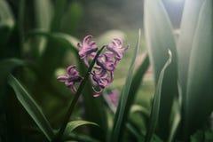 Świty wiosna Zdjęcie Stock