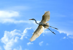 Wizard Dance. An egret flying in the blue sky and white clouds Stock Photo