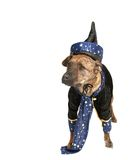 Wizard dog royalty free stock image