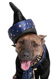 Wizard dog Stock Images