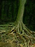 Wizard tree with roots. Wizard tree in a forest with exposed roots Stock Photo