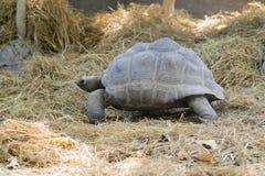 Wizerunek żółw na ziemi Obraz Royalty Free