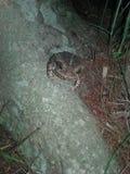 Wizerunek żaba zdjęcia royalty free