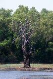 Wizerunek Azjatycki openbill bocian na gałąź zdjęcie royalty free