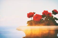 wizerunek balkonowy widok marina, stara kwiat waza Zdjęcia Stock
