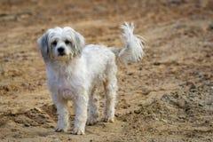 Wizerunek bielu pies na natury tle pet zdjęcia royalty free
