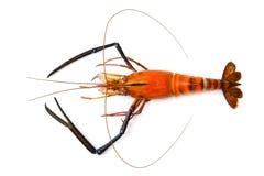 Wizerunek czerwień gotował krewetki lub homara na białym tle fotografia royalty free