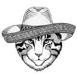 Wizerunek domowego kota dzikie zwierzę jest ubranym sombrero Meksyk fiesta meksykanina przyjęcia ilustracyjnego Dzikiego zachód Obrazy Royalty Free