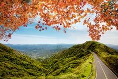 Wizerunek droga w jesieni jesieni lasowym krajobrazie Zdjęcie Royalty Free