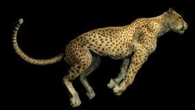 Wizerunek gepard Zdjęcia Stock
