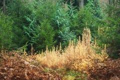 Wizerunek jesień las w holandiach Obrazy Stock