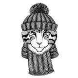 Wizerunek jest ubranym trykotowego kapelusz i szalika domowy kot Zdjęcie Stock