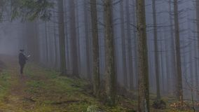 Wizerunek kobieta obserwuje papierową mapę wśród wysokich sosen w lesie zdjęcie royalty free