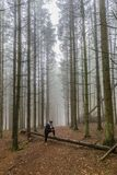 Wizerunek kobieta patrzeje papierową mapę odpoczywa na bagażniku spadać drzewo wśród wysokich sosen w lesie obraz royalty free
