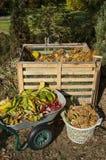 Wizerunek kompostowy kosz w ogródzie zdjęcie royalty free