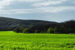 Wizerunek krajobraz i niebieskie niebo z wzorami od chmur zielona trawa pszeniczny pole lub Pojęcie Zdjęcie Royalty Free