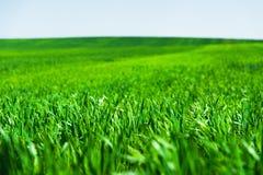 Wizerunek krajobraz i niebieskie niebo z wzorami od chmur zielona trawa pszeniczny pole lub Pojęcie Fotografia Royalty Free