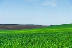 Wizerunek krajobraz i niebieskie niebo z wzorami od chmur zielona trawa pszeniczny pole lub Pojęcie Obrazy Stock
