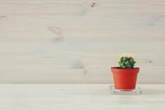Wizerunek mały kaktus w garnku na x28 & stole; stresu i relaksu concept& x29; Zdjęcie Royalty Free