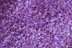 Wizerunek purpurowy czosnek w Tajlandia Zdjęcie Royalty Free