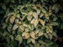 Wizerunek składa się zieleń liście kreatywnie układ obrazy royalty free