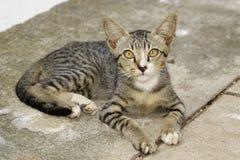 Wizerunek uroczy kot pet zdjęcia stock