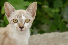 Wizerunek uroczy kot pet zdjęcie royalty free