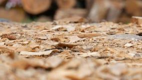 Wizerunek z trociny i Piłować Drewniane części w szalunek produkcji Fabrycznym terenie fotografia stock
