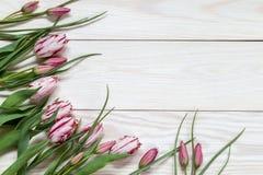 Wizerunek z tulipanami Zdjęcie Royalty Free