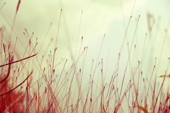 wizerunków abstrakcjonistyczni liść Zdjęcie Stock
