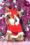 Wizerunków boże narodzenia z Santa Claus suknią Yorkshire Fotografia Royalty Free