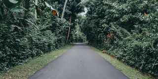 Wizerunki wiejska natura z lasami na dobrze i opuszczać w wiosce, obrazki drogi, z zieloną naturą fotografia royalty free