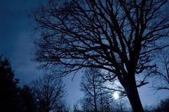 wizerunku konceptualny drzewo Fotografia Royalty Free