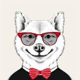Wizerunku portreta Akita inu pies w cravat z szkłami i również zwrócić corel ilustracji wektora Fotografia Royalty Free